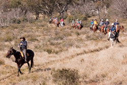 Horse Riding Tours In Australia