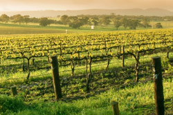 Wine Tours in Australia