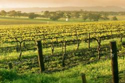 Wine Tours in Australia
